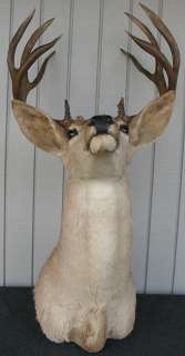 1952 Taxidermy Mounted Buck Deer Head Antlers 10 Point Rack