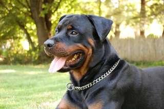 Sprenger Choke Steel Chain Dog Collar With Toogle