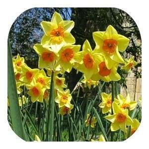 Coasters Country Flower/Flowers/Floral   (CSFL 195)