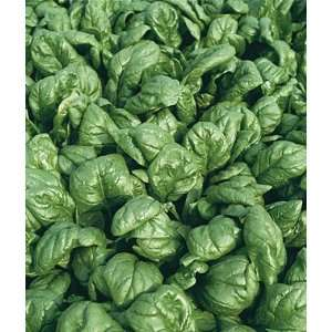 Spinach, Palco Hyb Organic 1 Pkt. (200 Seeds) Patio, Lawn