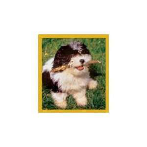New Magnetic Bookmark Shih Tzu Puppy Ready To Play High Quality Modern