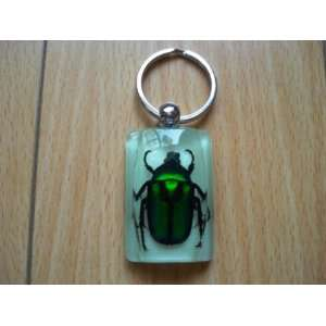 Green Rose Chafer Beetle/key Chain Arts, Crafts & Sewing