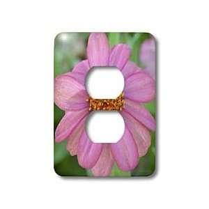 Patricia Sanders Flowers   Natures Pink Zinna Flower