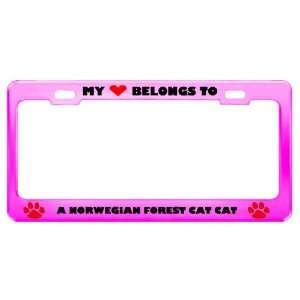 A Norwegian Forest Cat Cat Pet Pink Metal License Plate