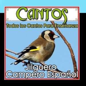 . Jilguero Campero Español Sonido y Cantos de Pajaros Music
