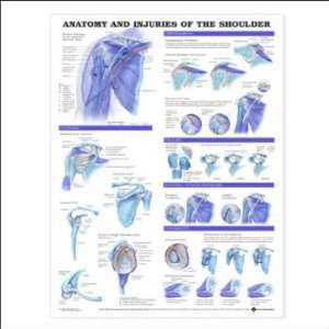Anatomy and Injuries of the Shoulder Anatomical Chart Plastic Styrene