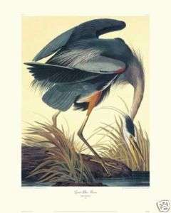 Great Blue Heron by John James Audubon Canvas Giclee