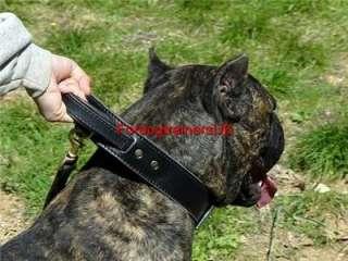 New Leather Agitation Dog Collar with Handle  C33