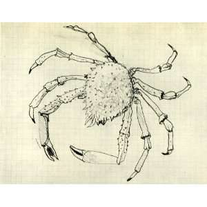 1955 Heliogravure Georges Braque Crab Ocean Wildlife Verve